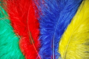 Feathers used for abstract macro photography