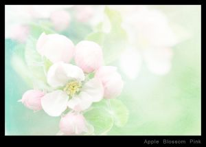 Apple Blossom Pink.jpg