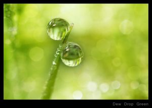 Dew Drop Green.jpg
