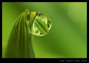 Leaf Green Dew Drop.jpg