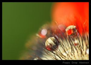 Poppy Drop Abstract.jpg