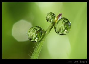 Trio Dew Drops.jpg
