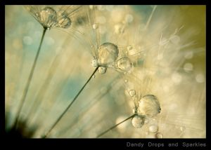 Dandy Drops and Sparkles.jpg