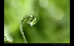 Early morning Dew.jpg